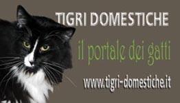 Il portale dei gatti - Tigri Domestiche - www.tigri-domestiche.info