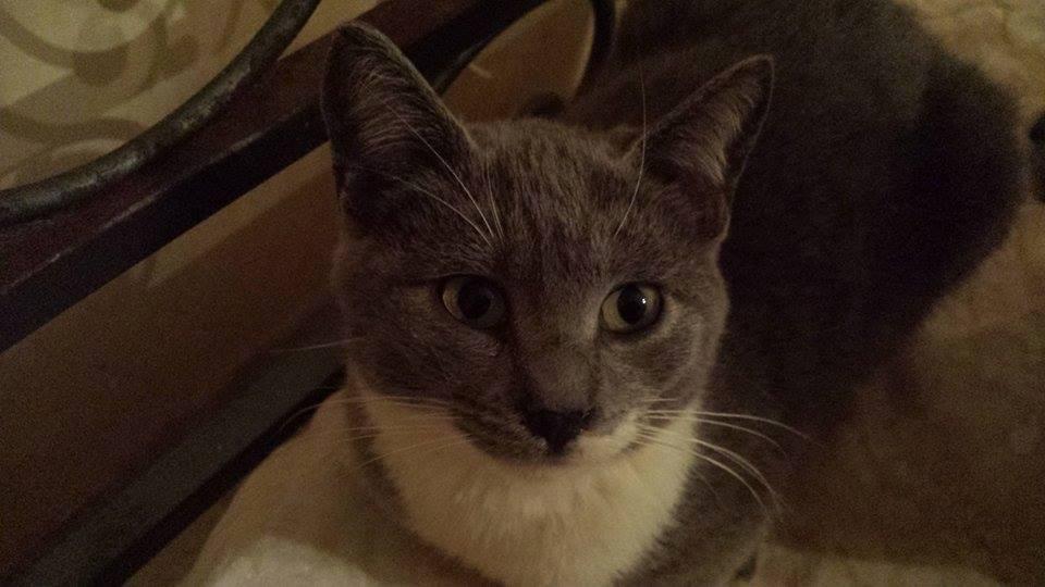 Gatti e gattini in regalo adozioni offro gatto regalo for Regalo annunci