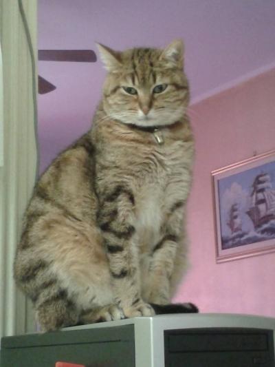 Gatti e gattini in regalo adozioni offro gatto regalo for Offro in regalo mobili