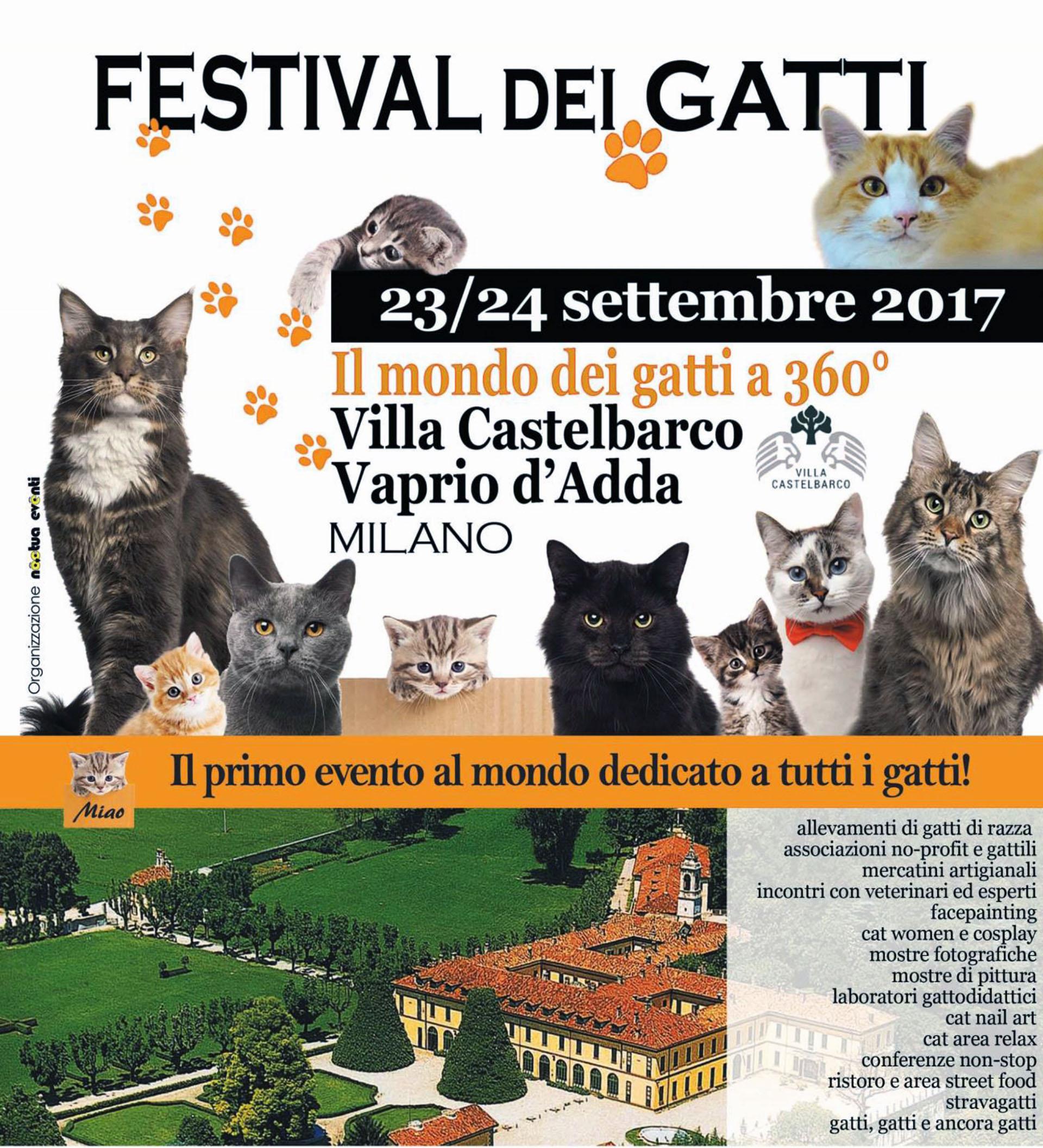 23 e 24 settembre 2017festival dei gatti a villa - Gatto solo in casa per 15 giorni ...