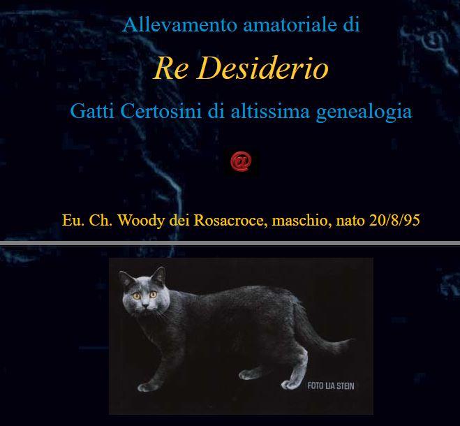 Allevamenti Gatti Chartreux Cfa Re Desiderio Chartreux