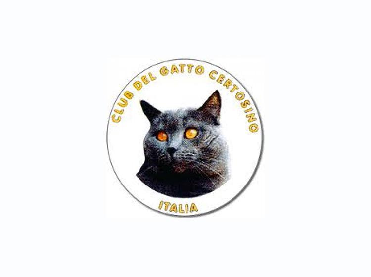 Club Del Gatto Certosino Italia