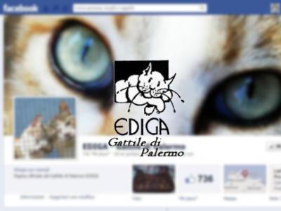 Volontariato gatti sicilia provincia di palermo for Pulizie domestiche palermo