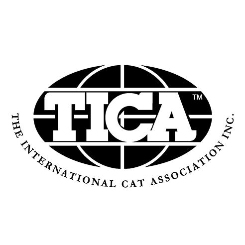 Allevamenti Gatti Chausie Cu Tica Catalogo Web Directory Tica