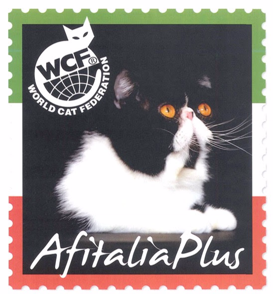 Allevamenti Gatti Siberiani Wcf Catalogo Web Directory Wcf Italia